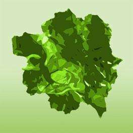 Organic Algae & Seaweeds